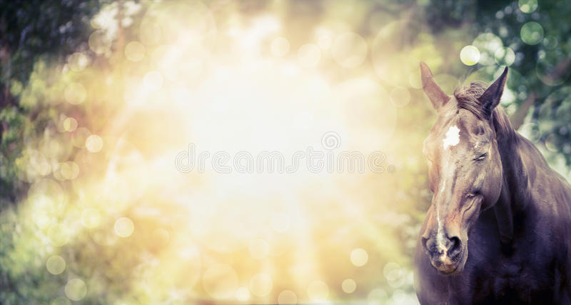 Happy horse on summer or autumn background with tree and sunlight. Banner. For website stock photography
