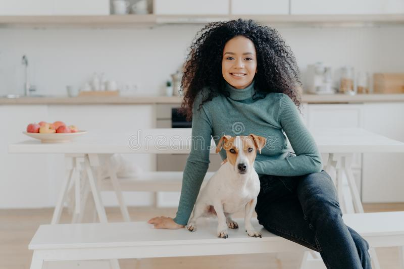 Happy housewife with Afro haircut, sits at bench with pedigree dog, have fun and look directly at camera, pose in kitchen, express stock image