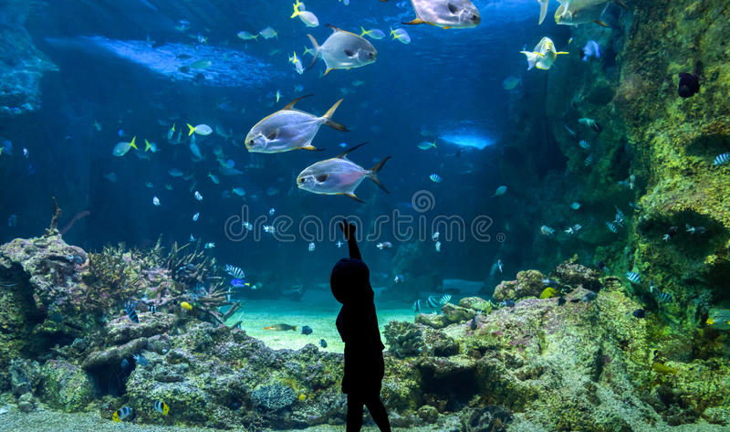 Happy kid observing fishes at a large aquarium stock photo