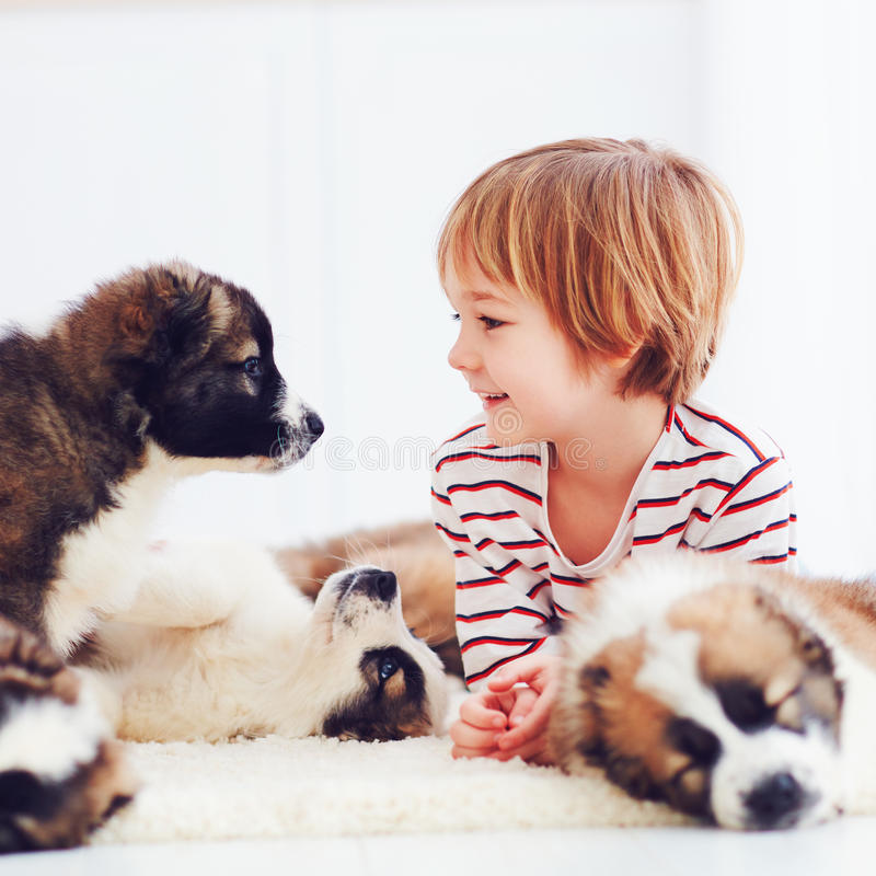 Happy kid playing with cute puppies at home royalty free stock images