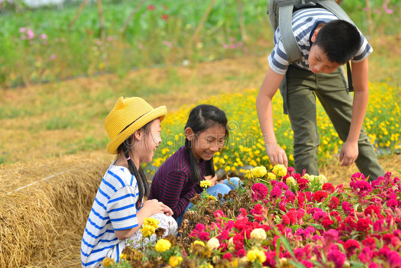 Happy kids harvesting flowers from garden. royalty free stock photography