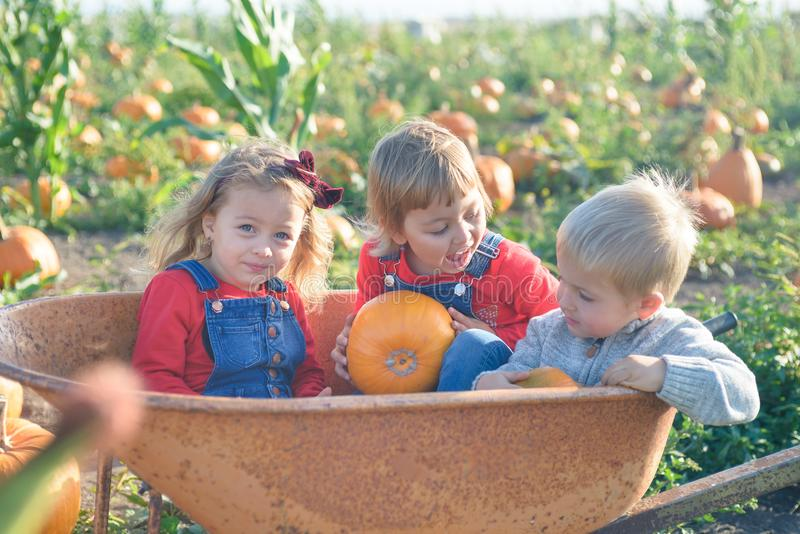 Happy kids sitting inside wheelbarrow at field pumpkin patch. Happy kids in jeans overalls sitting inside old wheelbarrow at farm field pumpkin patch, laughing royalty free stock image