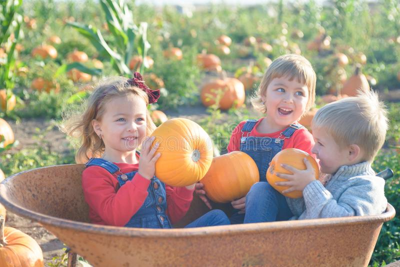 Happy kids laughing inside wheelbarrow at field pumpkin patch stock image