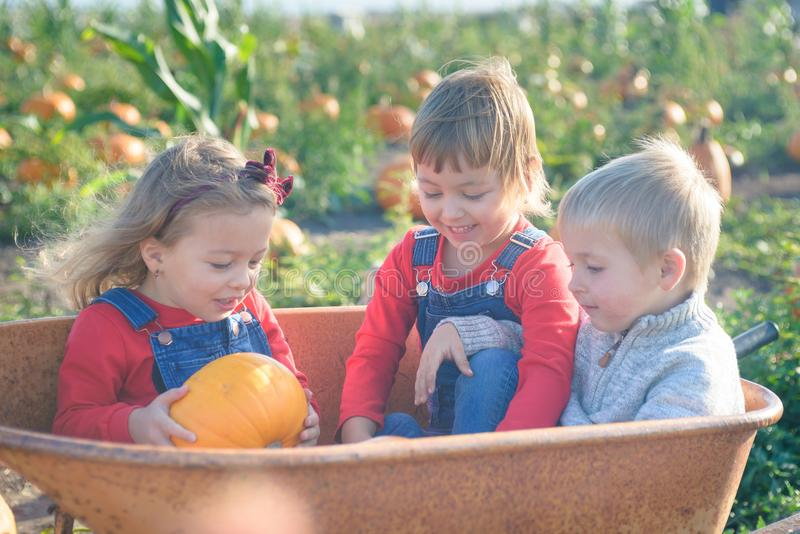 Happy kids sitting inside wheelbarrow at field pumpkin patch. Happy kids in jeans overalls sitting ine old wheelbarrow at farm field pumpkin patch, laughing stock photo