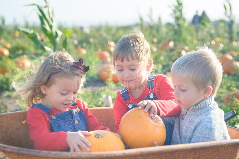 Happy kids sitting inside wheelbarrow at field pumpkin patch. Happy kids in jeans overalls sitting inside old wheelbarrow at farm field pumpkin patch, laughing stock photography