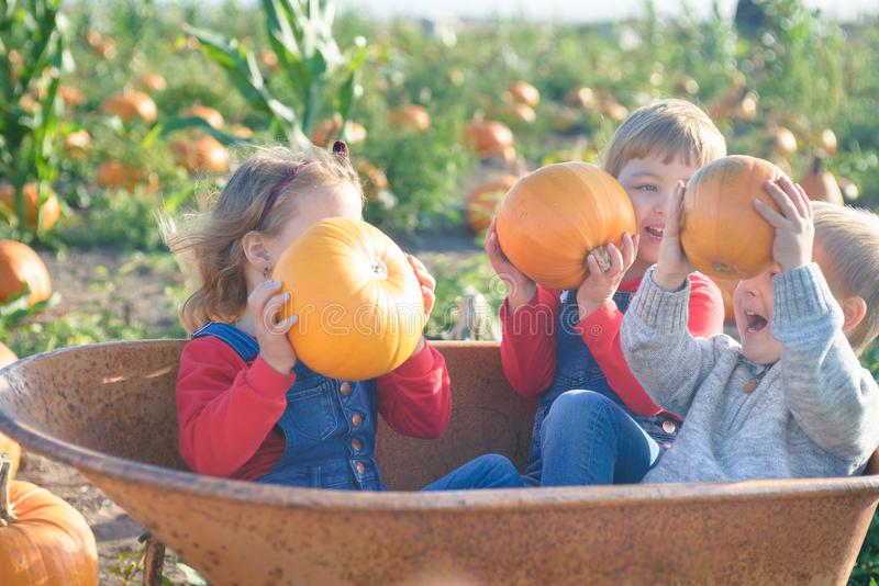Happy kids sitting inside wheelbarrow at field pumpkin patch. Happy kids in jeans overalls sitting inside old wheelbarrow at farm field pumpkin patch, laughing royalty free stock photos