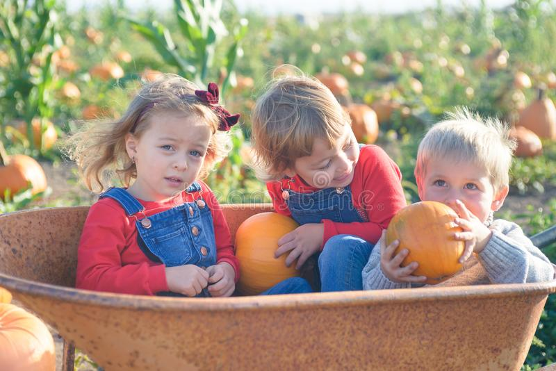 Happy kids sitting inside wheelbarrow at field pumpkin patch. Happy kids in jeans overalls sitting inside old wheelbarrow at farm field pumpkin patch, laughing stock photos