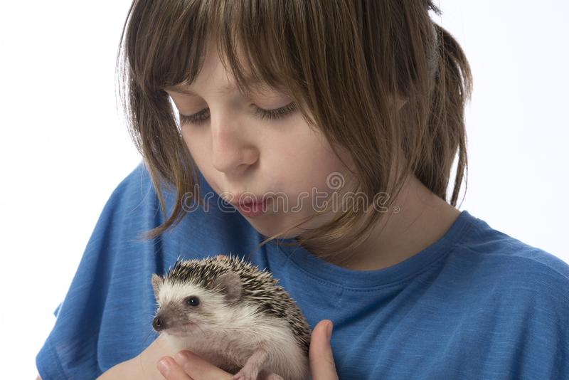 Happy litle girl with African pygmy hedgehog royalty free stock image