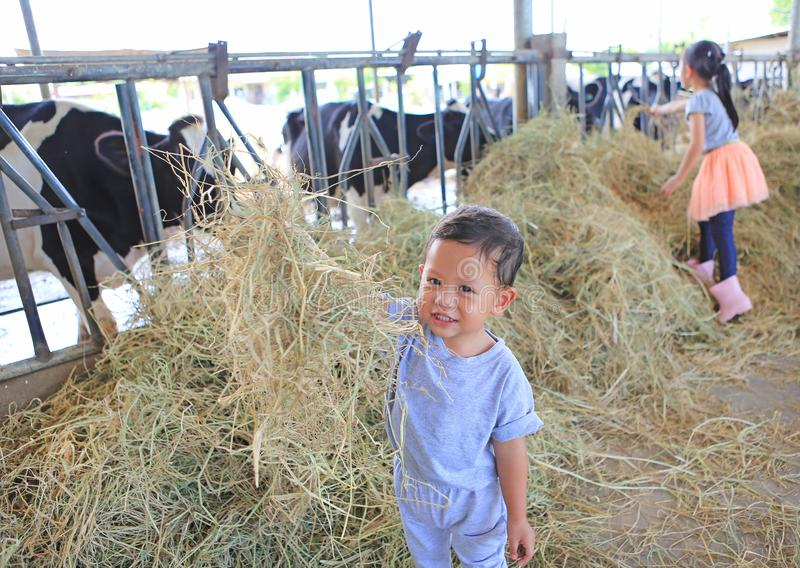 Happy little Asian baby boy in cows farm while feeding cow on holiday with family stock photo
