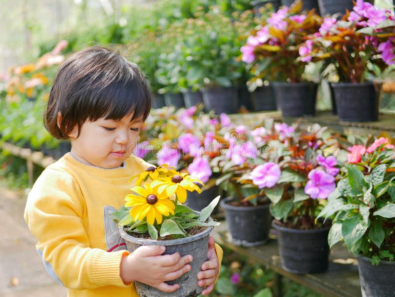 Happy little Asian baby girl holding a pot of refreshing yellow flowers. Engaging with nature provides positive impact on children`s health and development royalty free stock image
