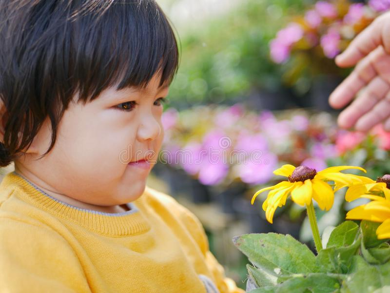A happy little Asian baby girl receiving / taking a pot of refreshing yellow flowers from her mother. Close up of a happy little Asian baby girl receiving / royalty free stock image