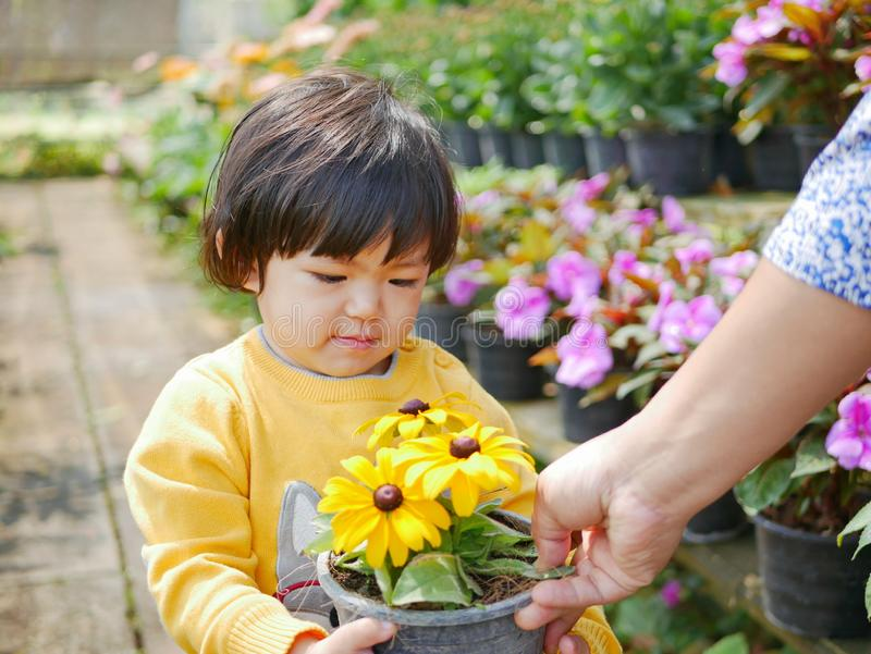 Happy little Asian baby girl receiving / taking a pot of refreshing yellow flowers from her mother. Engaging with nature provides positive impact on children` stock photos