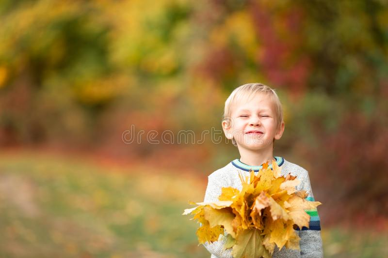 Happy little boy with autumn leaves in the park stock images