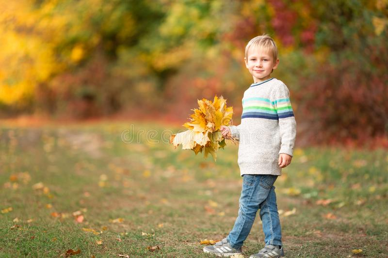 Happy little boy with autumn leaves in the park stock photo