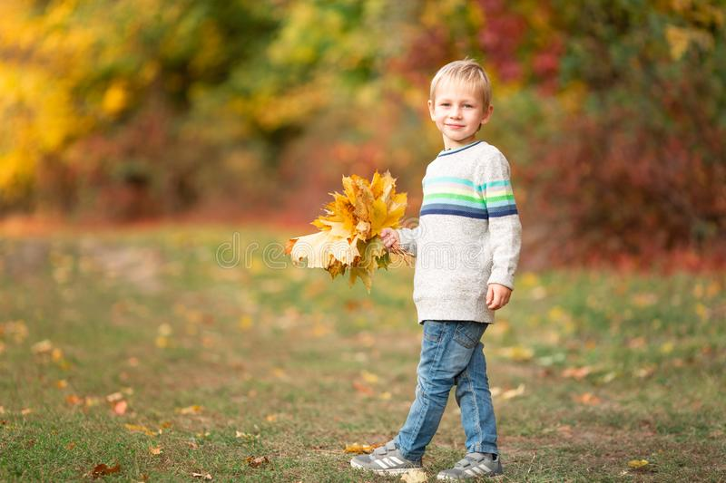 Happy little boy with autumn leaves in the park royalty free stock photography