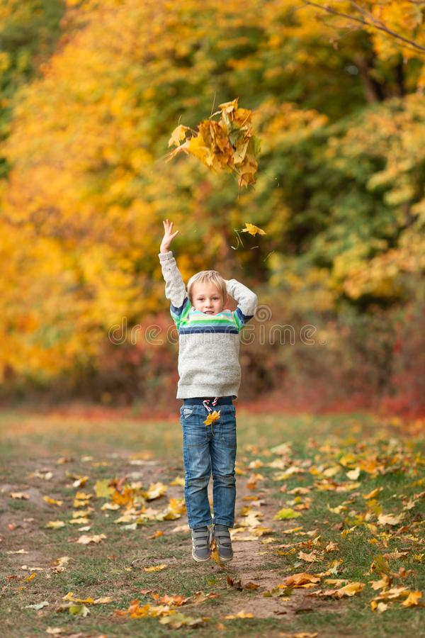 Happy little boy with autumn leaves in the park stock photos