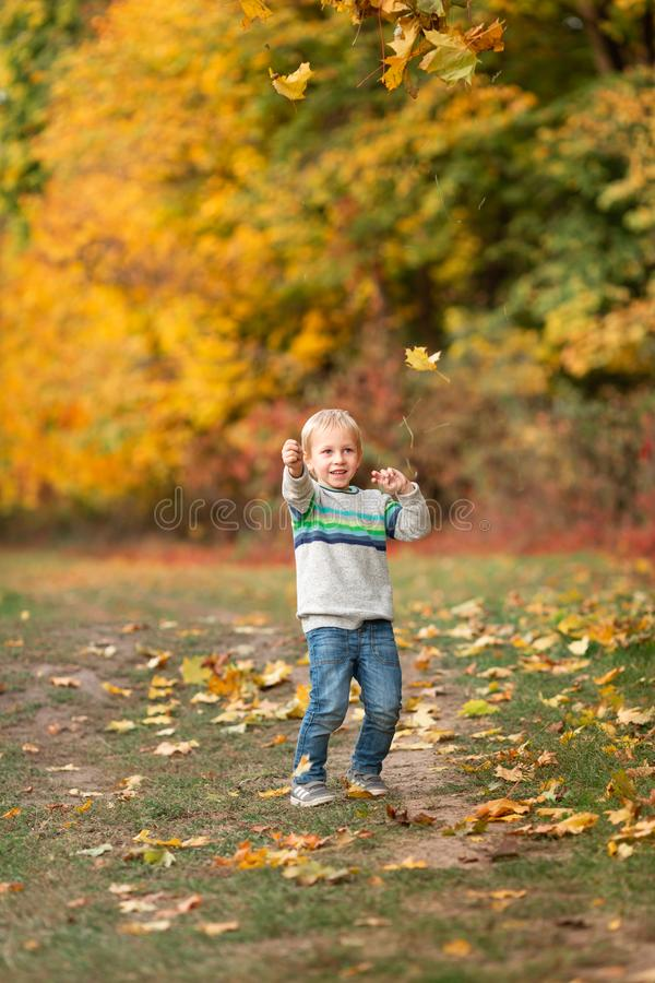 Happy little boy with autumn leaves in the park stock photography