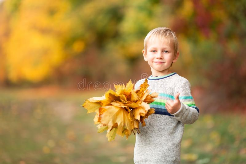 Happy little boy with autumn leaves in the park stock image