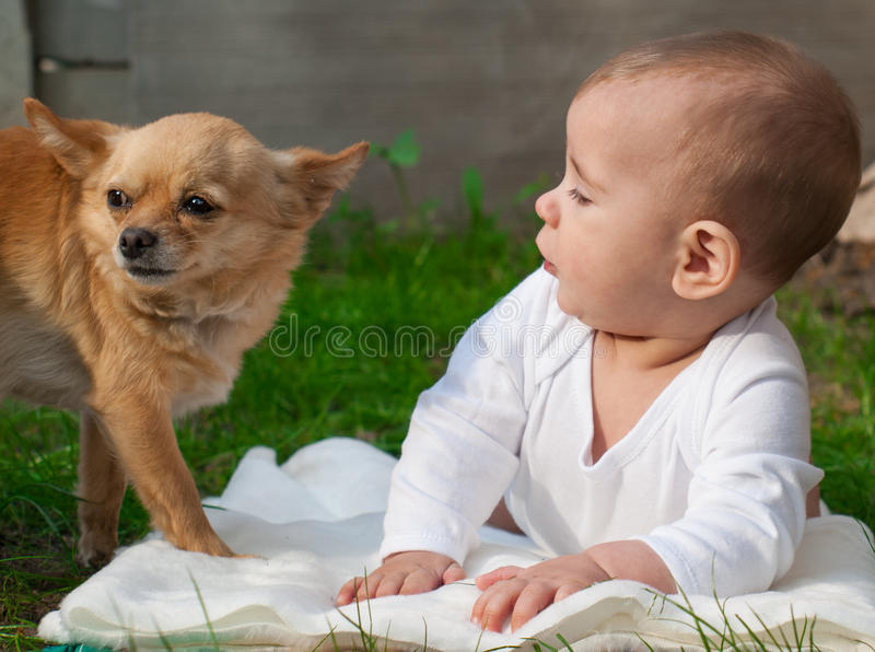 Happy little boy child and Chihuahua dog together. Little boy and Chihuahua dog together stock photography