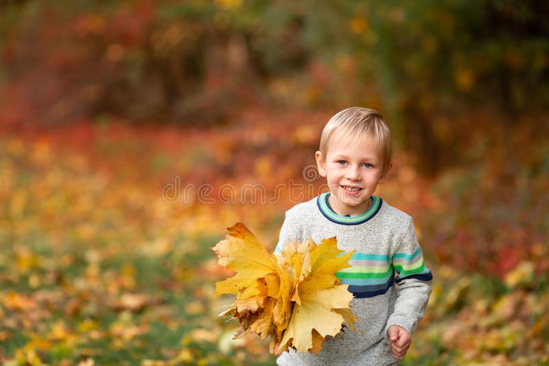 Happy little boy with autumn leaves in the park royalty free stock photos