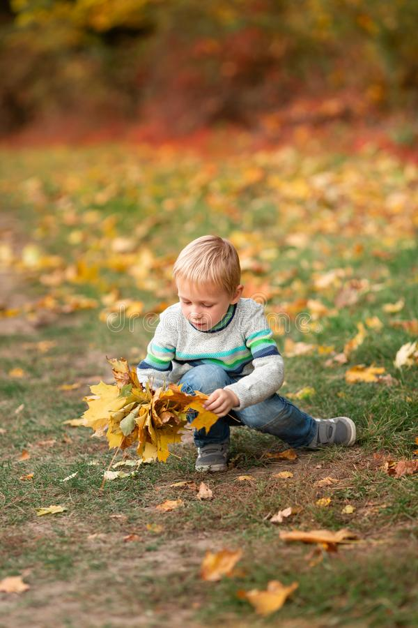 Happy little boy with autumn leaves in the park royalty free stock photo