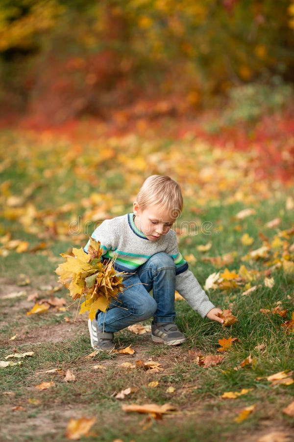 Happy little boy with autumn leaves in the park royalty free stock image