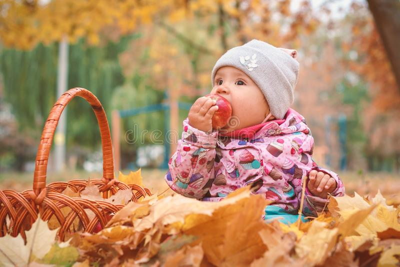 Charming child playing with apple and  yellow leaves.Cute toddler baby girl In autumn dress Sitting In foliage. stock photo