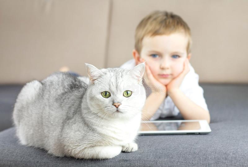 Happy little child relaxing on the couch with a Scottish silver cat. Boy child with cat friendship indoors and no allergy to pets stock photo