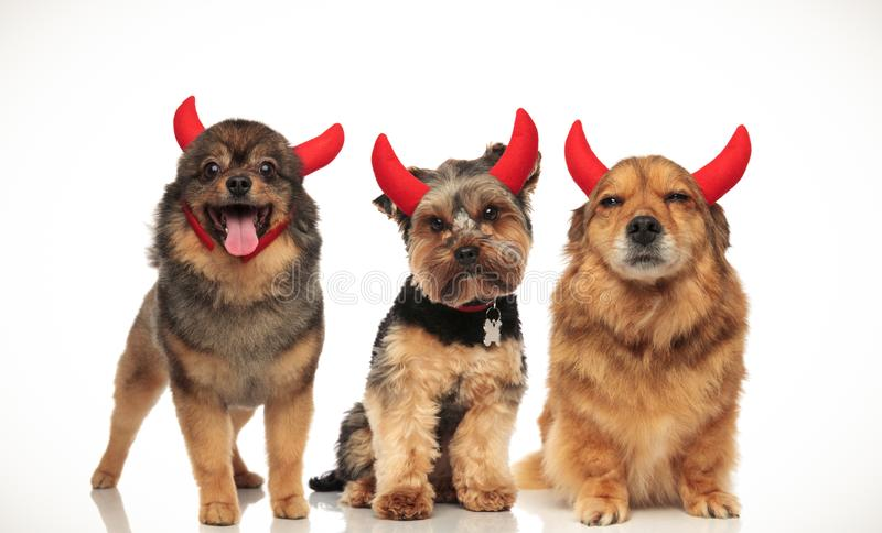 3 happy little devils celebrating halloween. Collage image stock photography