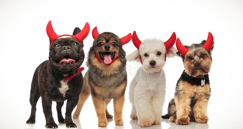 4 happy little dogs celebrating halloween. By wearing devil horns, collage image stock photos