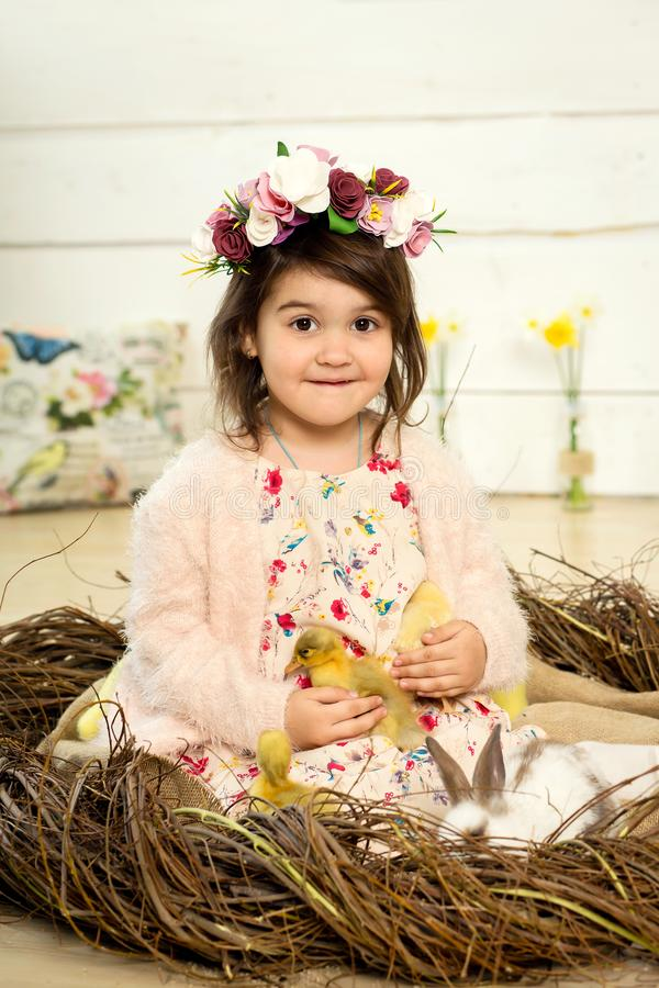 A happy little girl in a dress with flowers on her head is sitting in a nest and holding cute fluffy Easter ducklings in her arms. In the nest sits a white stock photo