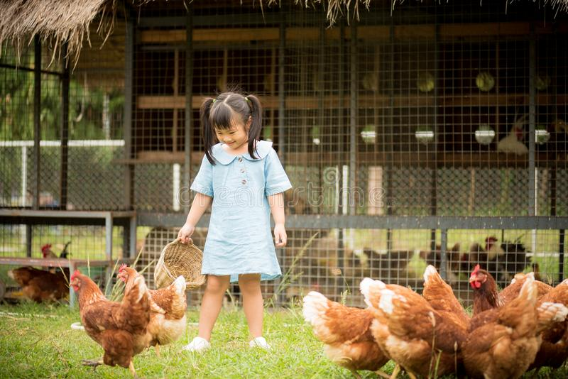 Happy little girl feeding chickens in front of chicken farm royalty free stock photos