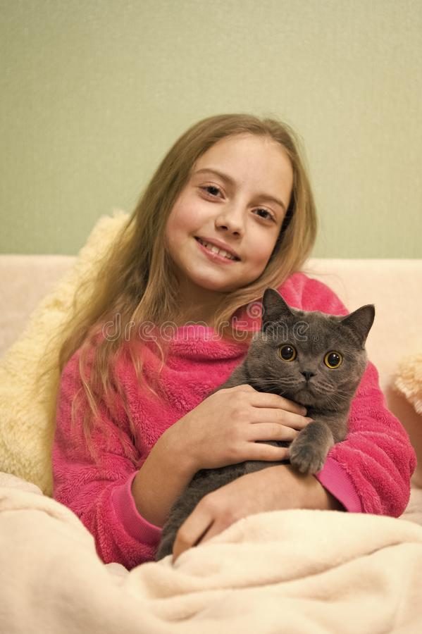 Happy little girl with grey cat in bed. Chartreux cat. British Shorthair breed. Korat grey cat in hands of smiling girl. Pet lovers. animals at home. happy stock photo