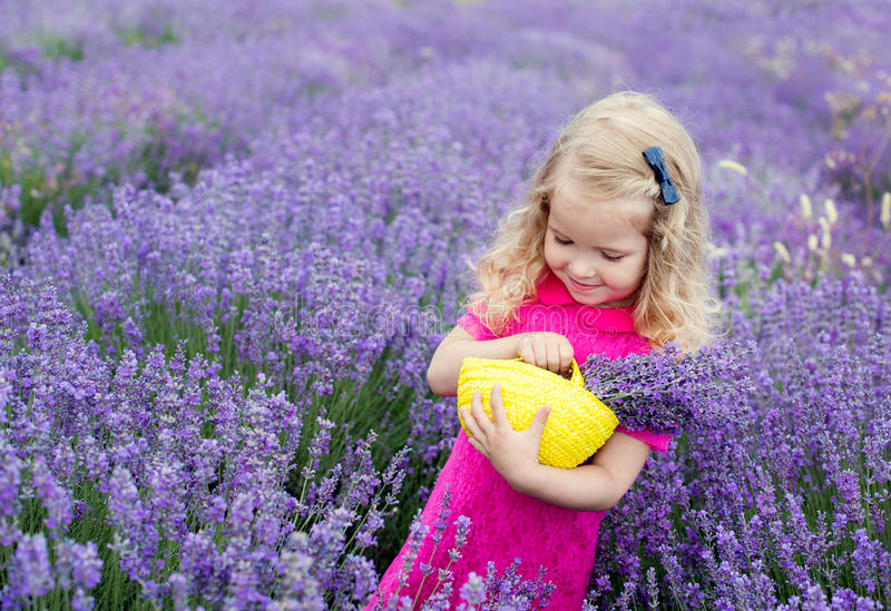 Happy little girl is in a lavender field. Holds a basket of flowers stock photo