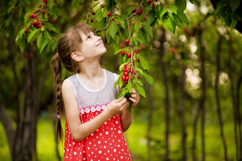 Happy little girl play near cherry tree in summer garden. Kid picking cherry on fruit farm. Child pick cherries in summer orchard. Harvest time fun for family royalty free stock photos