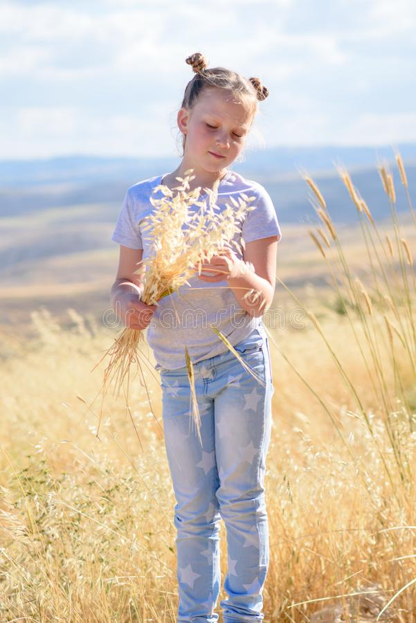 Blonde little girl holding spikes of wheat and ears of oats in golden harvest field. stock images