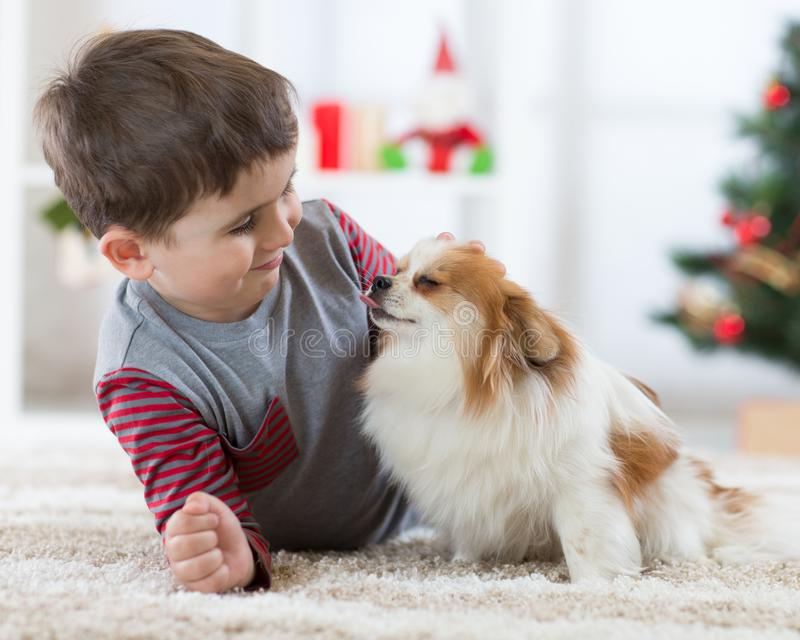 Happy little kid boy and dog at Christmas stock photo
