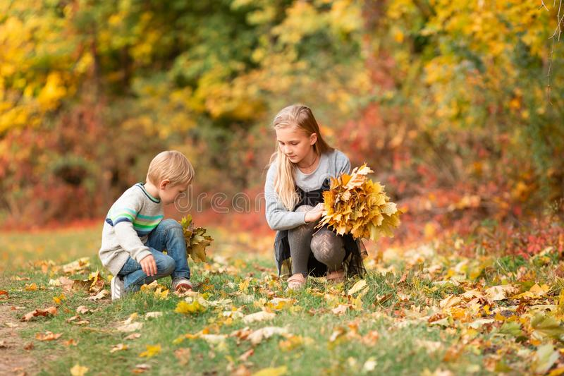 Happy little kids with autumn leaves in the park stock images