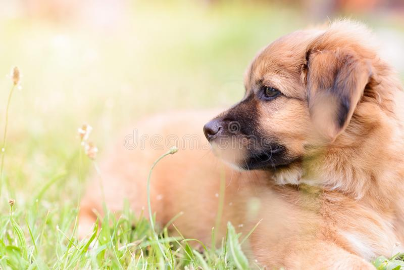 Happy little puppy dog. In the garden stock photos
