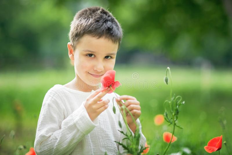 Happy little smiling boy standing and smiling in poppy field. Portrait of a brunet boy 5-6 years old in summer outside, Childrens day, young, caucasian, red royalty free stock photography