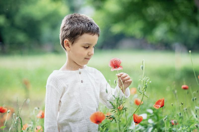 Happy little smiling boy standing and smiling in poppy field. Portrait of a brunet boy 5-6 years old in summer outside, Childrens day, young, caucasian, red royalty free stock image