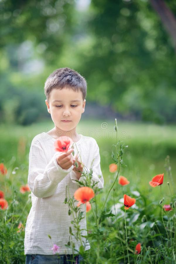 Happy little smiling boy standing and smiling in poppy field. Portrait of a brunet boy 5-6 years old in summer outside, Childrens day, young, caucasian, red stock photography
