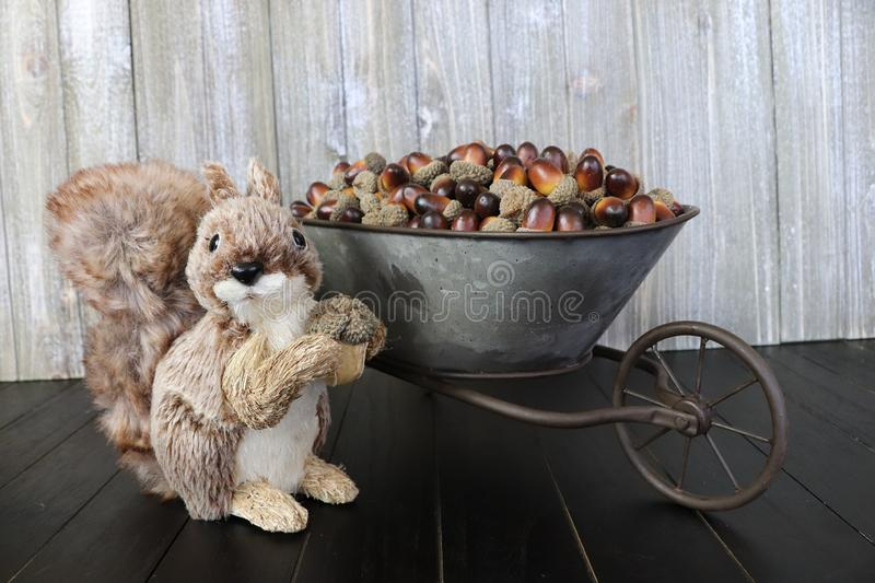 A happy little squirrel with a stash of acorns. A happy squirrel with his stash of acorns in a wheelbarrow stock image