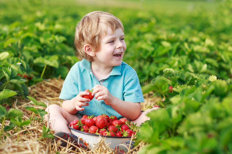 Happy little toddler boy on pick a berry farm picking strawberries in bucket. Outdoors royalty free stock images