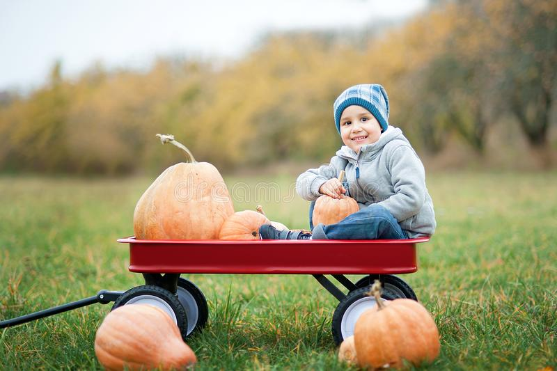 Happy little toddler boy on pumpkin patch on cold autumn day, with a lot of pumpkins for halloween or thanksgiving. Kid on pumpkin field on cold autumn day stock photo
