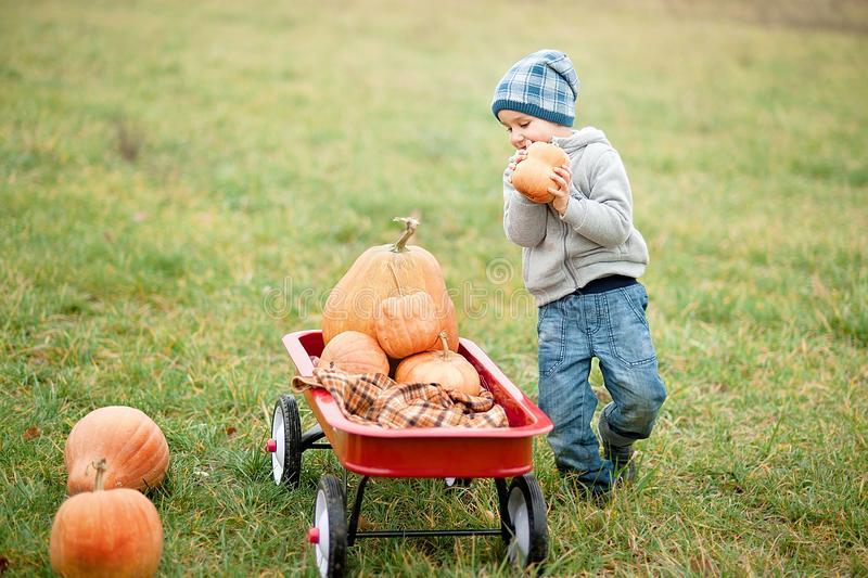 Happy little toddler boy on pumpkin patch on cold autumn day, with a lot of pumpkins for halloween or thanksgiving. Happy little toddler boy on pumpkin patch on stock photo