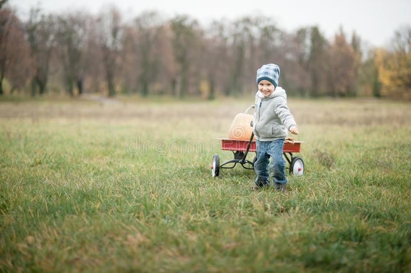 Happy little toddler boy on pumpkin patch on cold autumn day, with a lot of pumpkins for halloween or thanksgiving. Happy little toddler boy on pumpkin patch on royalty free stock photos