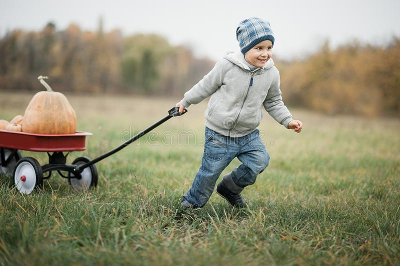 Happy little toddler boy on pumpkin patch on cold autumn day, with a lot of pumpkins for halloween or thanksgiving. Happy little toddler boy on pumpkin patch on stock image