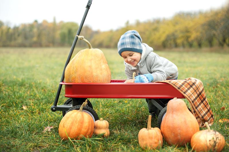 Happy little toddler boy on pumpkin patch on cold autumn day, with a lot of pumpkins for halloween or thanksgiving. Kid on pumpkin field on cold autumn day stock image