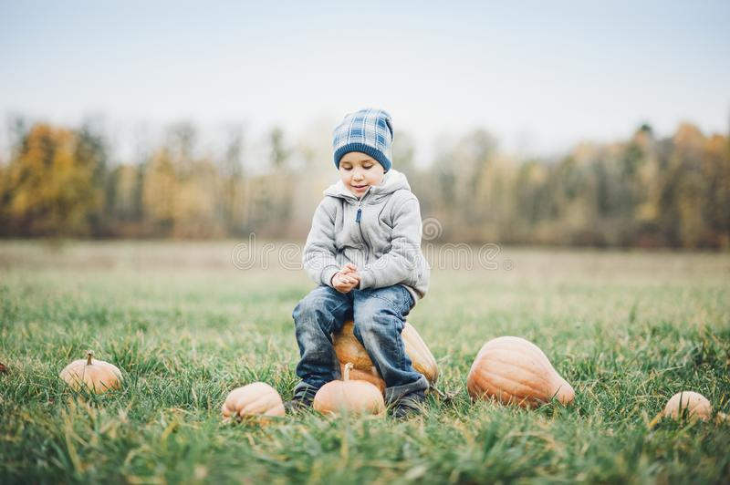 Happy little toddler boy on pumpkin patch on cold autumn day, with a lot of pumpkins for halloween or thanksgiving stock photos